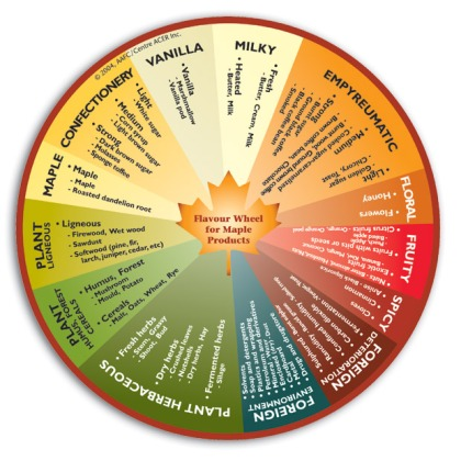 Flavor Wheel for Maple Syrup