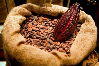 cacao-fruit-beans-ecuador1