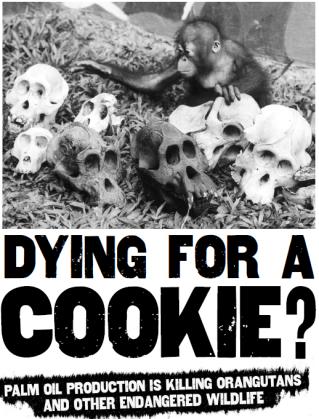 dead monkeys